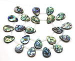 Abalone paua shell, 12x16mm teardrop top drilled shell beads on sale
